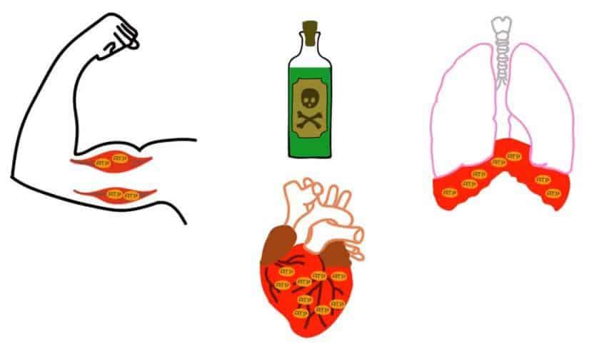 اخطار السموم وكيفية الوقاية منها