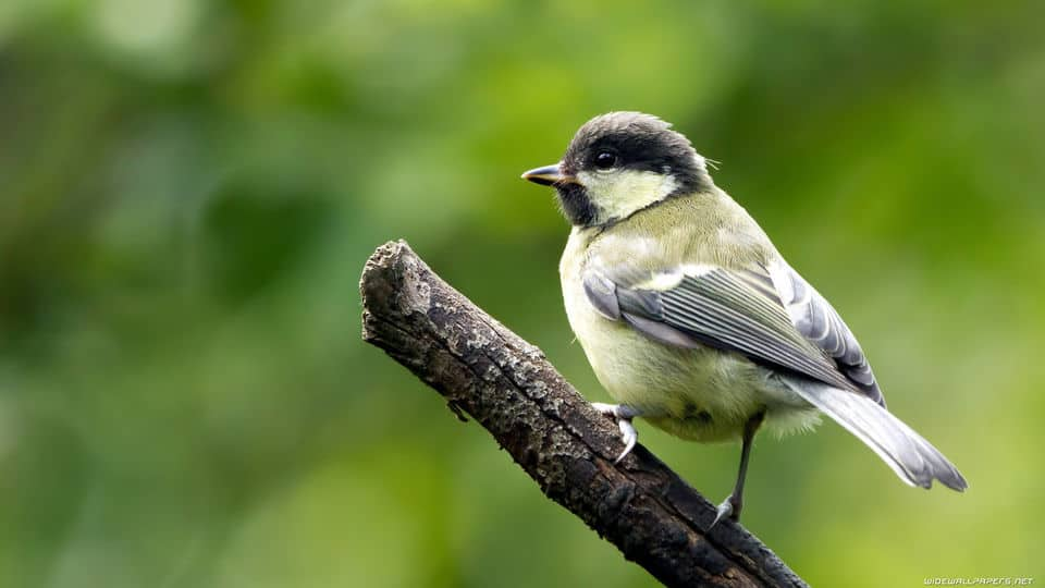 بحث عن الطيور