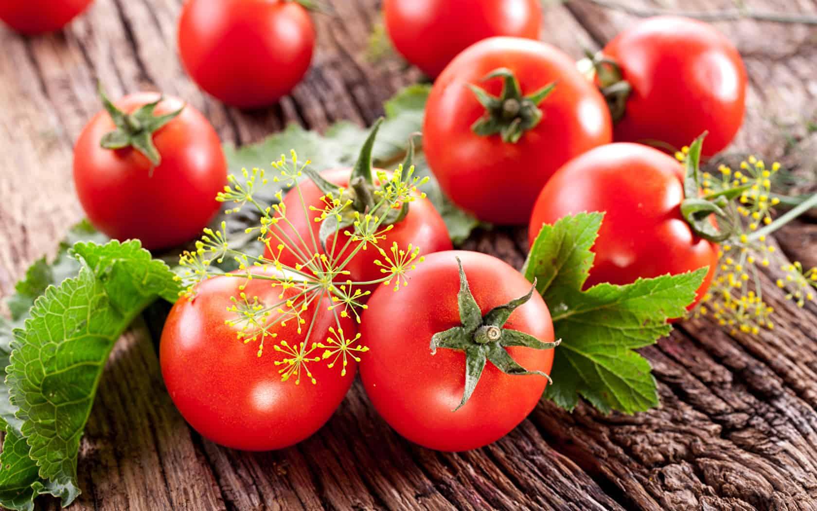 متى تزرع الطماطم