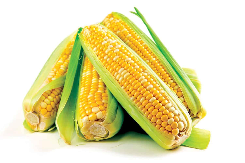 ما هي فوائد نبات الذرة وطريقه استخدامها