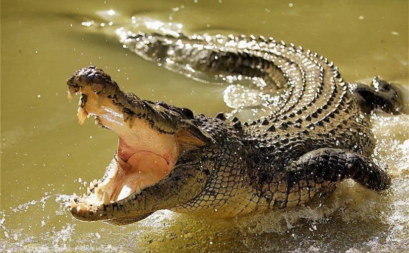 تفسير رؤية التمساح في المنام تفسير الهروب من تمساح في المنام موسوعة