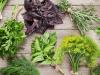 علاج الأملاح بالأعشاب سريعة المفعول