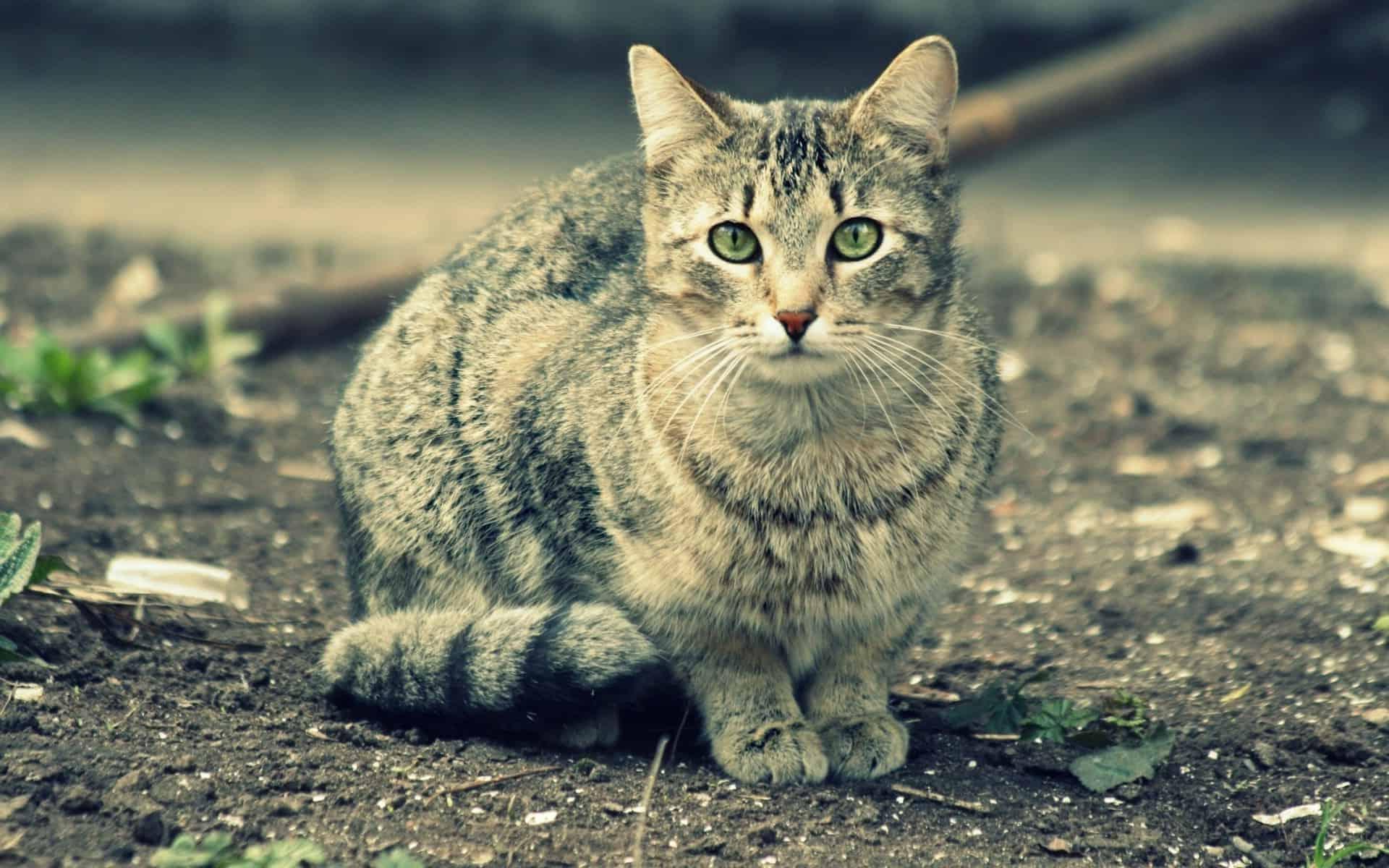 هل ترى القطط اشياء لا نراها