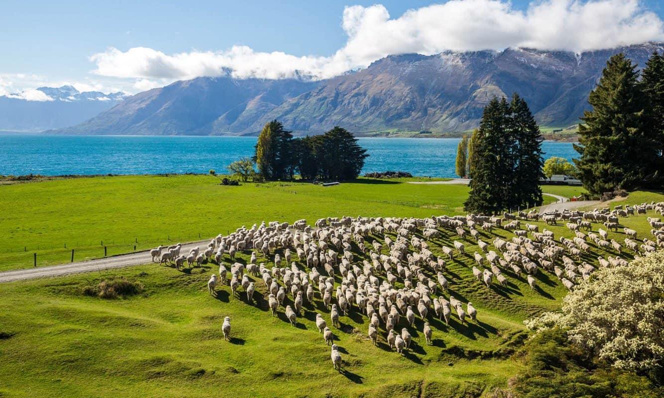 معلومات عن الحياة في نيوزيلندا