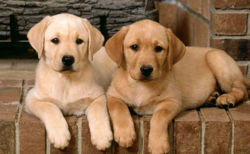 أجمل اسماء كلاب ذكور قوية واجدد اسماء كلاب ذكور لولو 2020