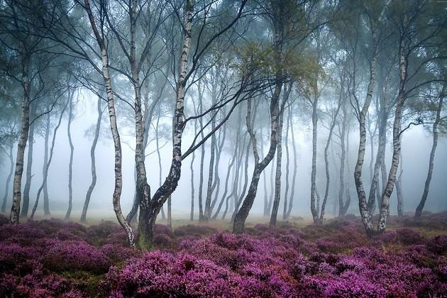 صور هادئه ملونه طبيعية دافئة