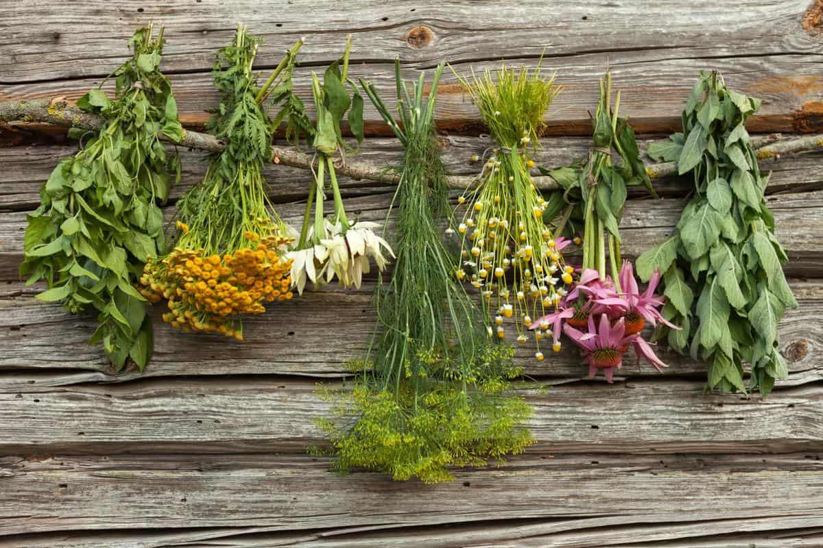 نتيجة بحث الصور عن أعشاب لعلاج التهاب اللوز