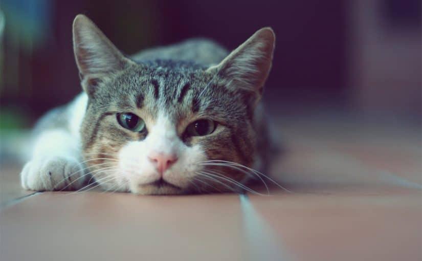 كيفية قص اظافر القطط