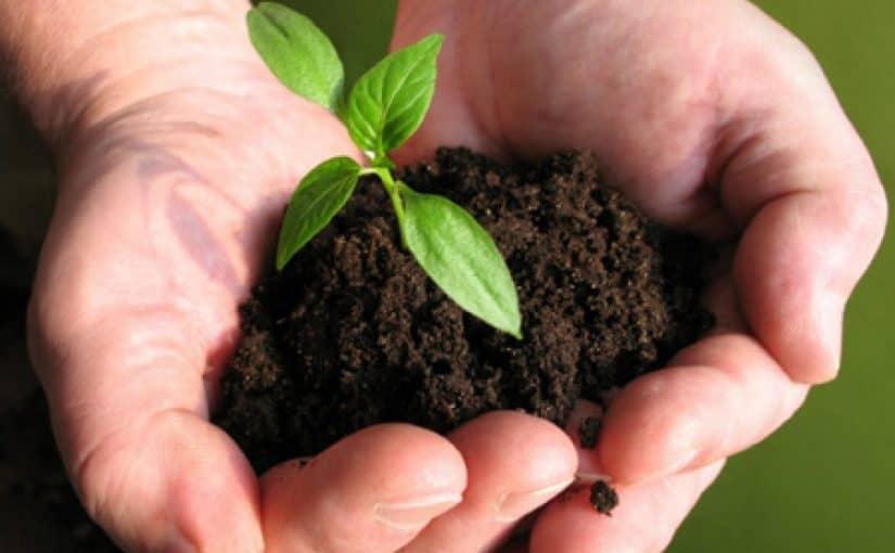 كيفية الزراعة في البيت