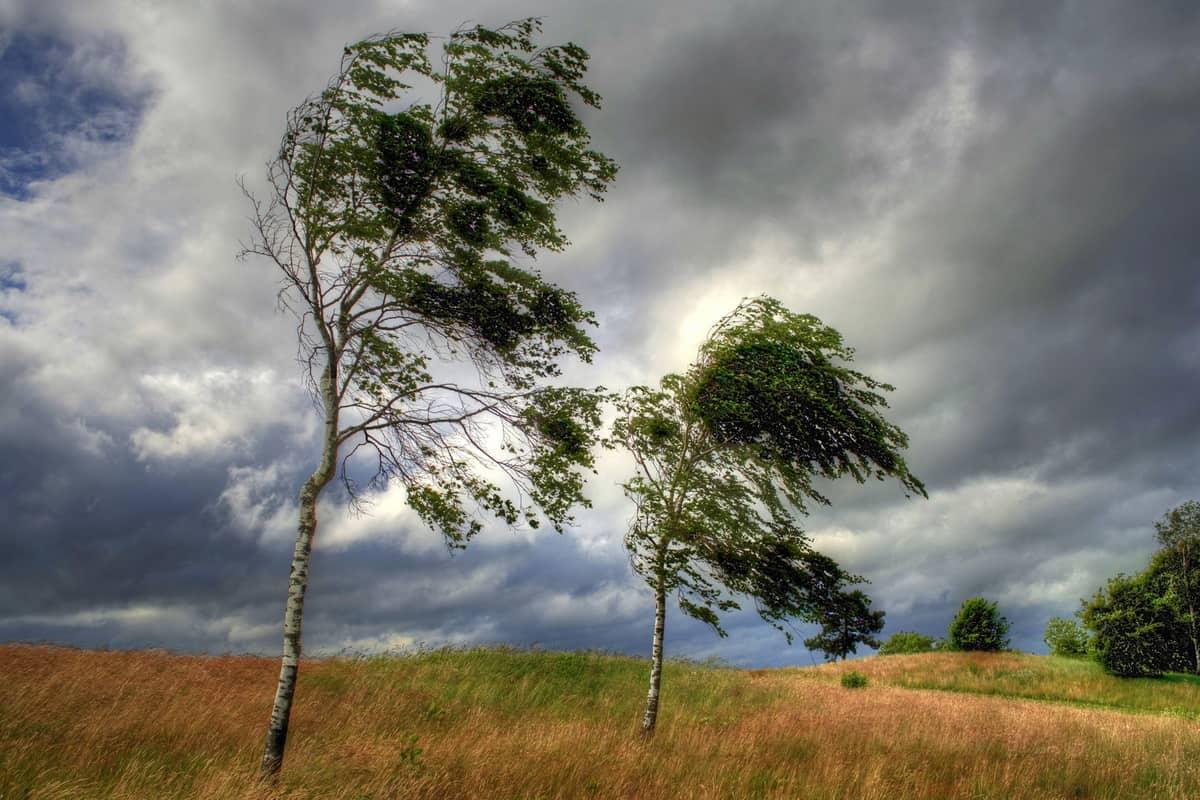 ابحث عن كيفية الحد من مخاطر الرياح