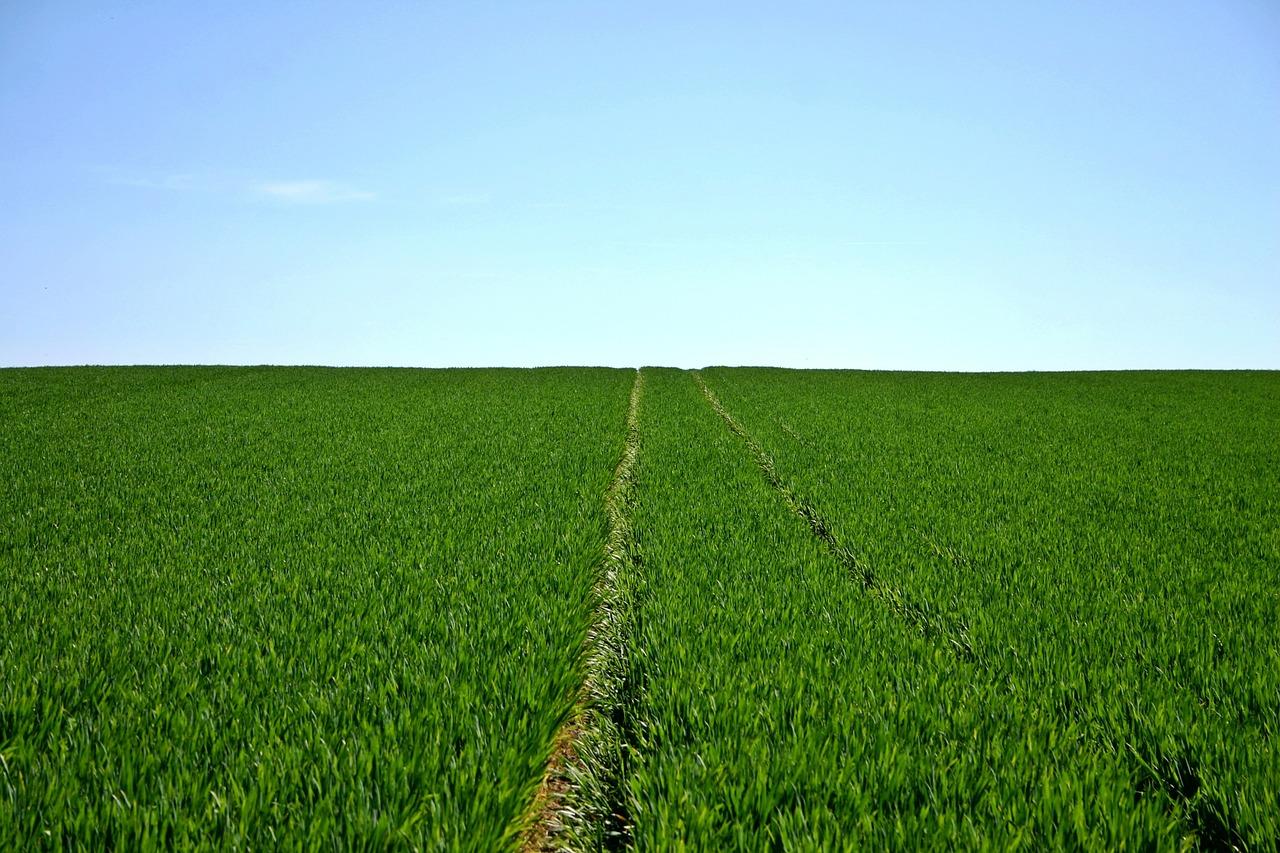 الزراعة في الامارات قديما