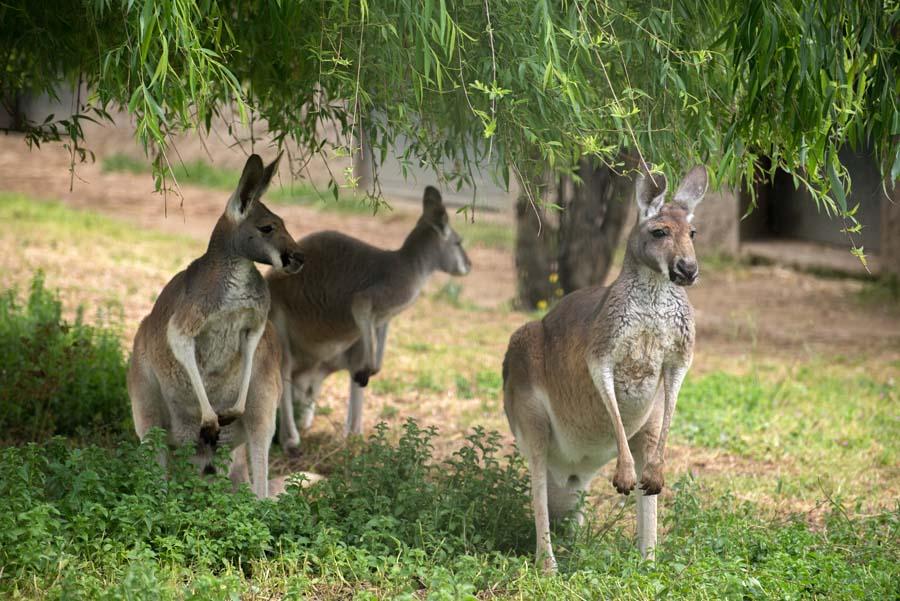 حديقة حيوان سابنجا