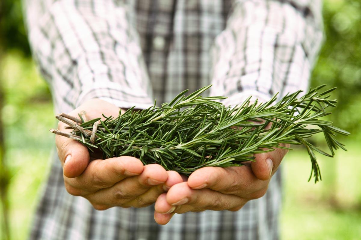 معلومات عن نبات عوسج موسوعة