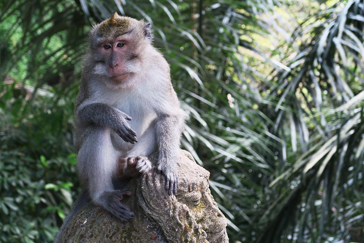 تفسير رؤية القرد في الحلم
