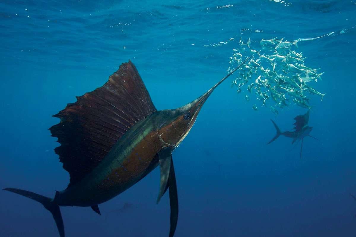 ما هو اسرع المخلوقات البحرية