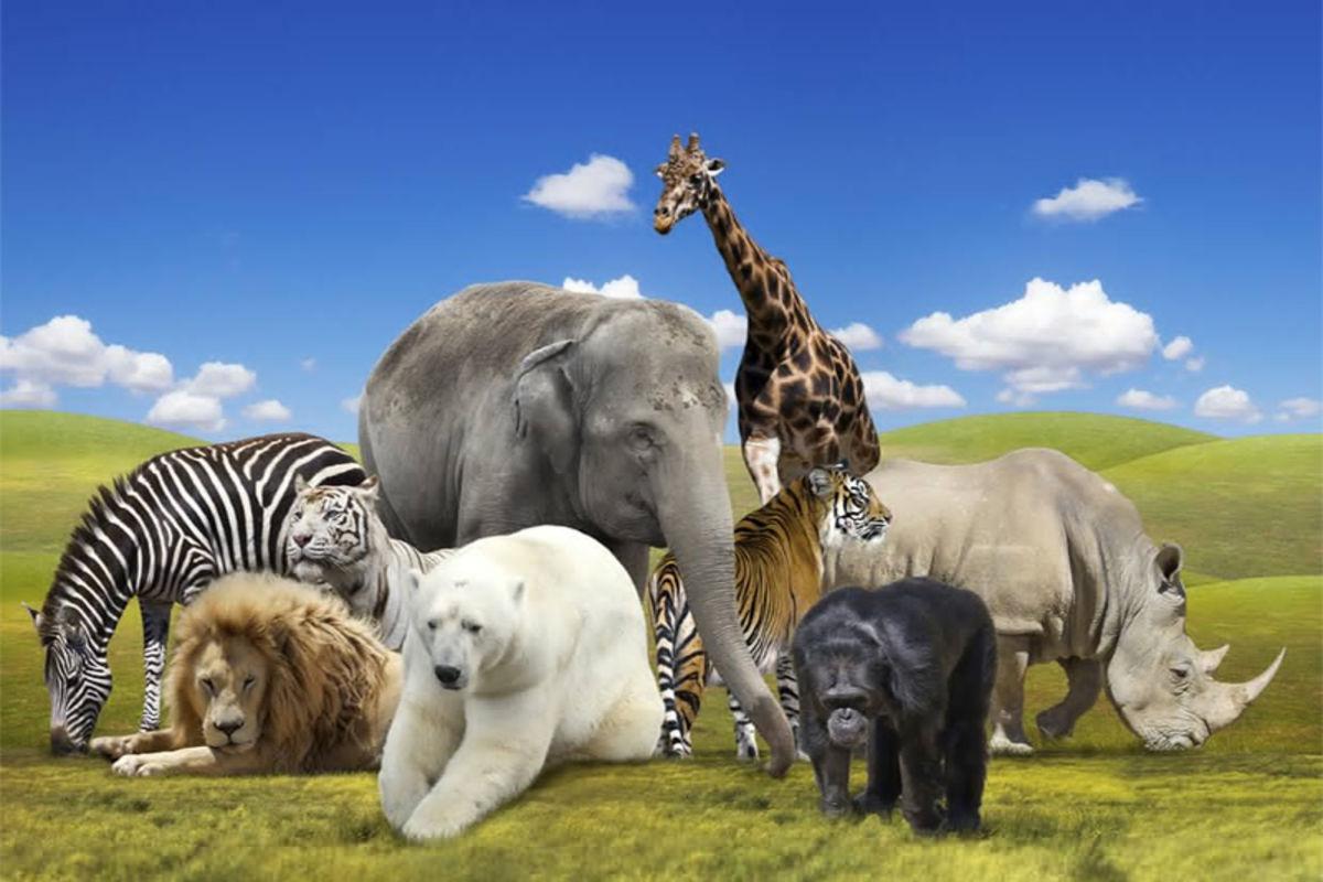 موضوع عن الحيوانات