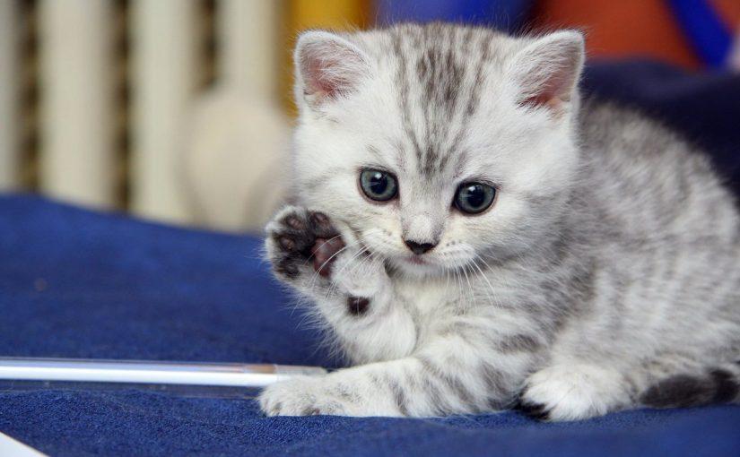 اسماء قطط ذكور