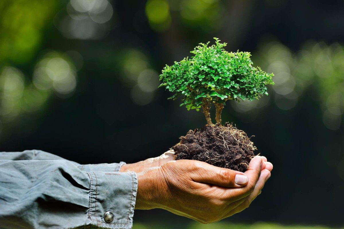 هل تعلم عن البيئة