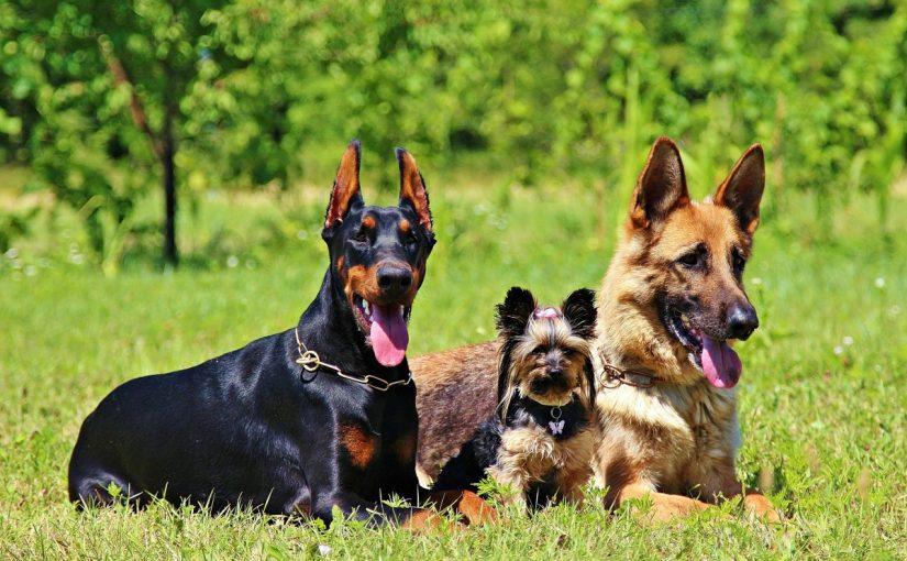 من أهم أسماء الكلاب بالعربي