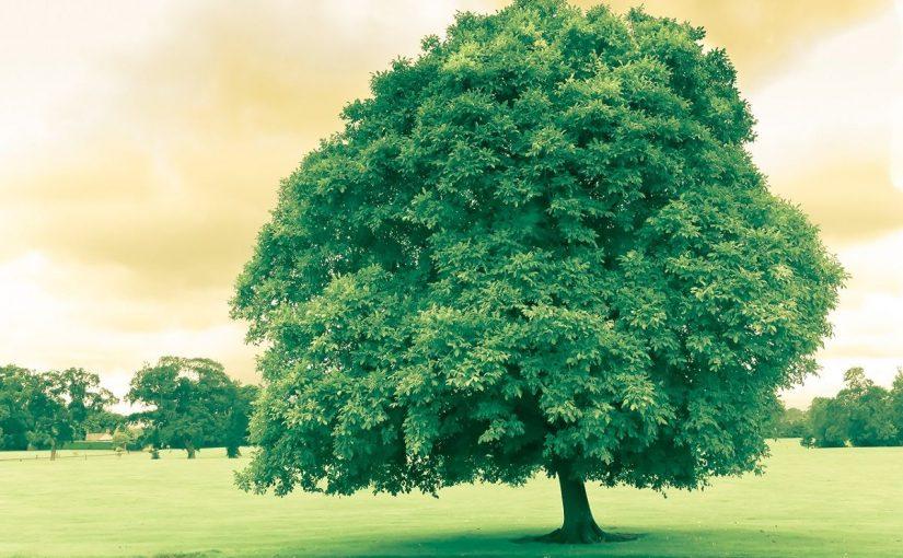 فوائد الشجرة