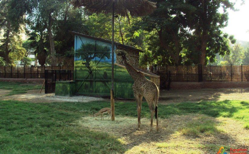 حديقة الحيوان في دبي اين تقع موسوعة