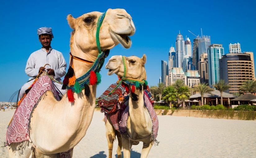 معلومات عن تراث الإمارات