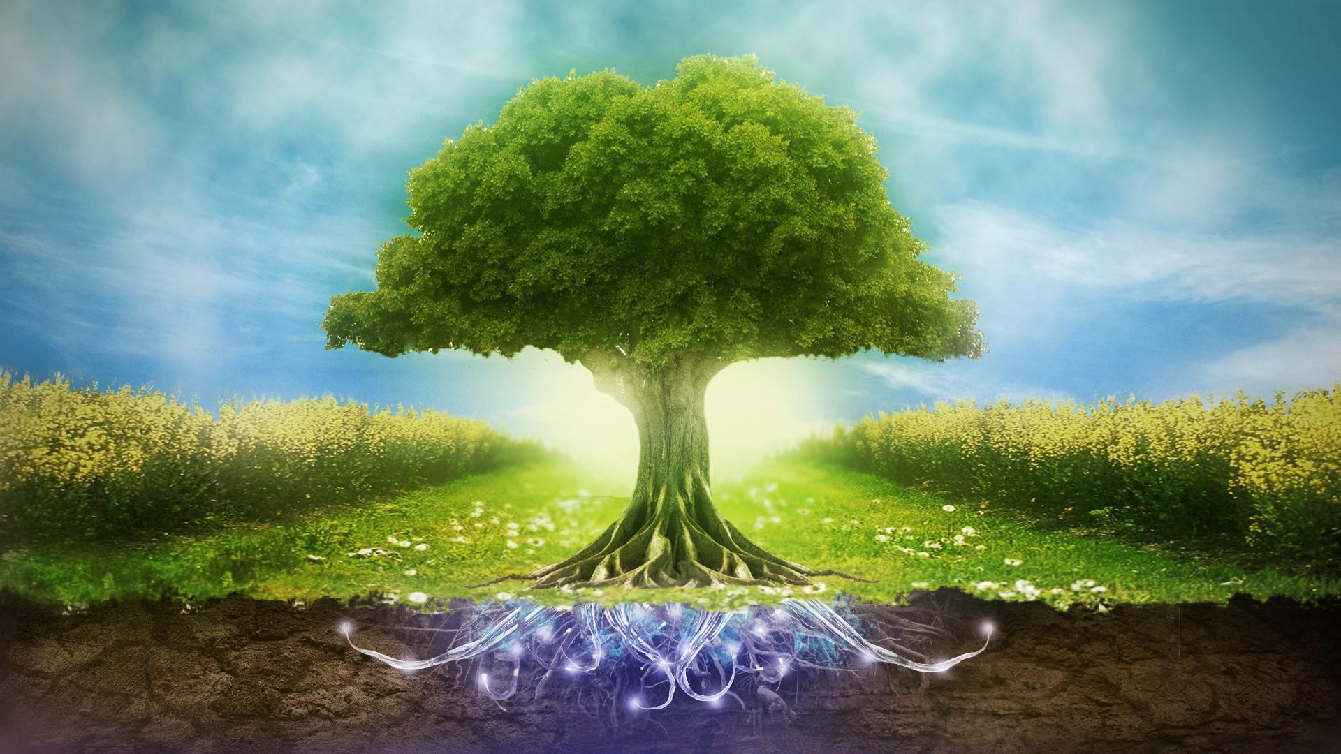 بحث عن البيئة والتلوث