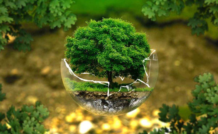 بحث عن علم البيئة