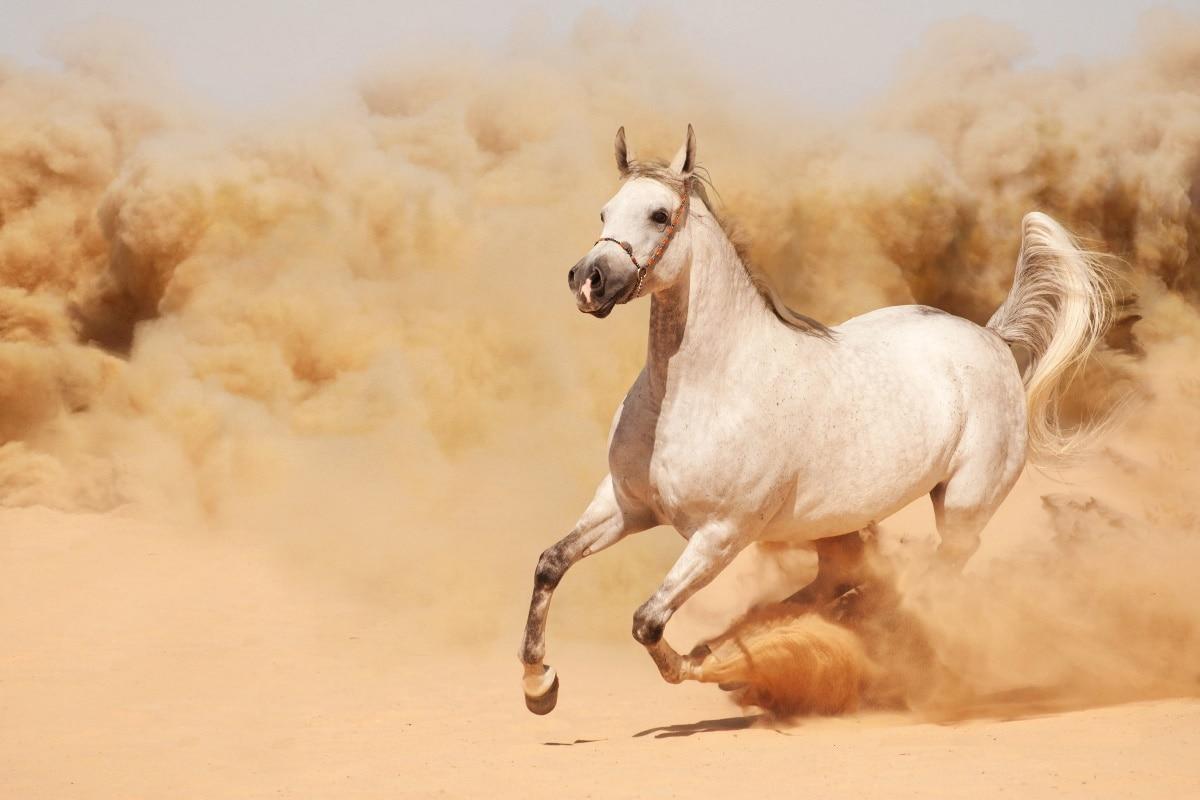 ما هو تفسير الحصان في المنام