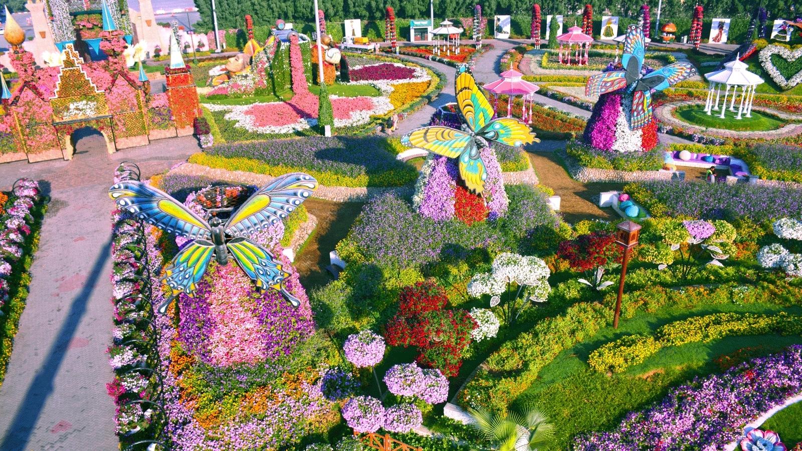 حديقة دبي للفراشات