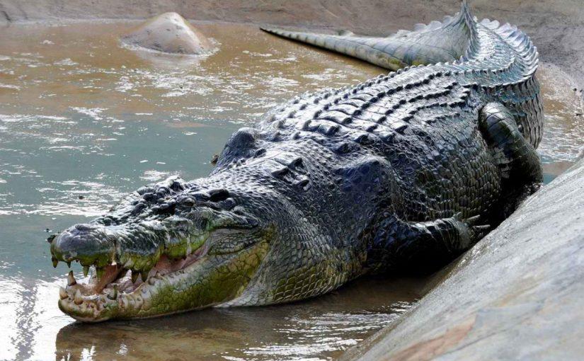 بالفيديو.. سعوديون يصطادون تمساحًا ويأكلونه في جنوب إفريقيا