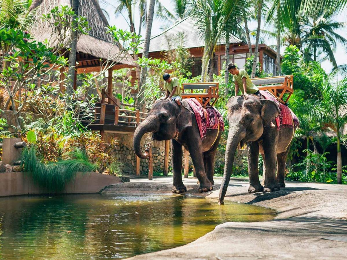 حديقة الفيلة