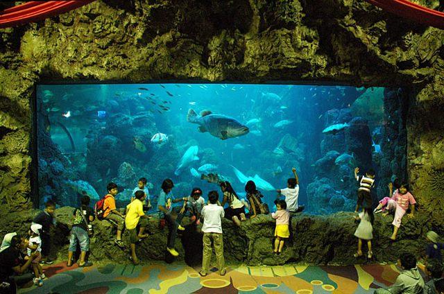 عالم البحار جاكرتا