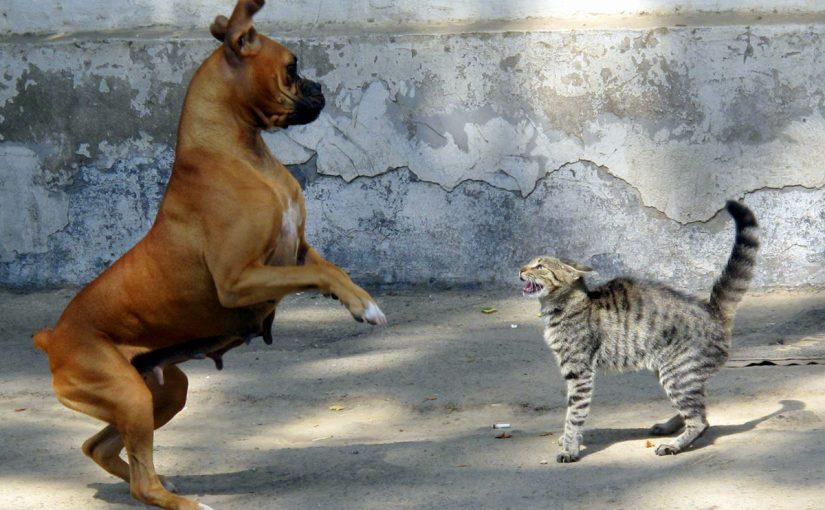 قصة عداوة الكلاب للقطط