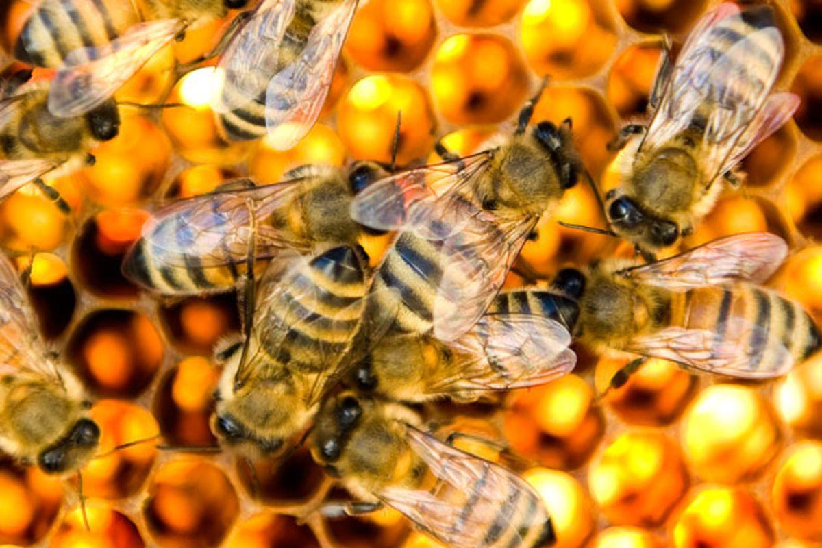طريقة استخدام غذاء ملكات النحل للجنس