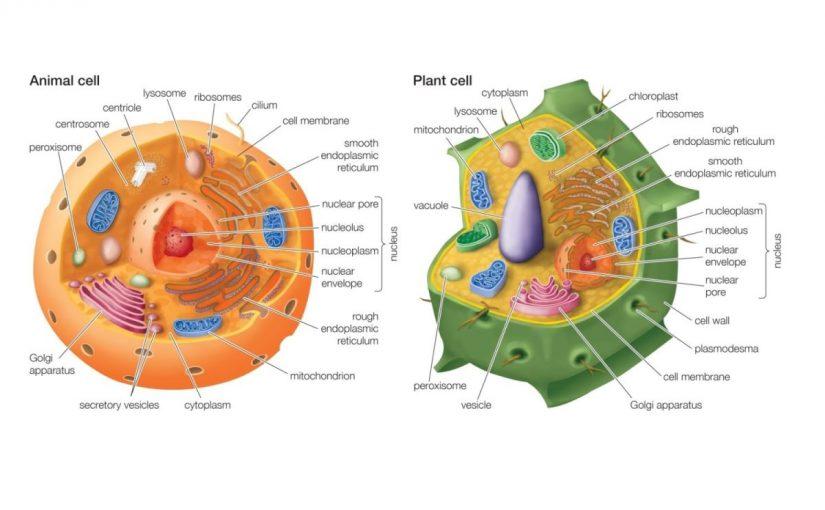 بحث عن الخلية