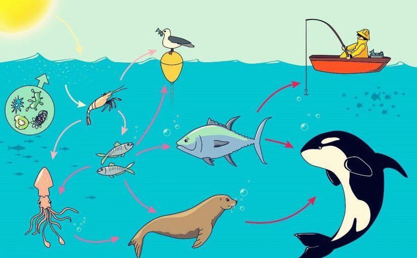 كيف تحصل المخلوقات الحية على الطاقة