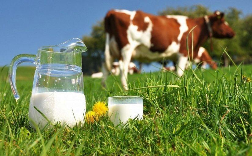 فوائد الحليب لجسم الانسان