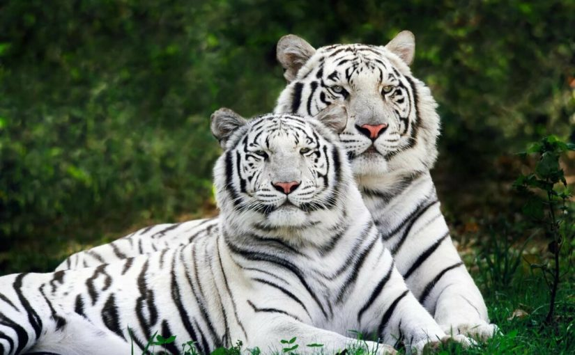 بحث عن الحيوانات المهددة بالانقرض