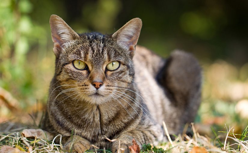 تفسير رؤية القطط في المنام لابن سيرين