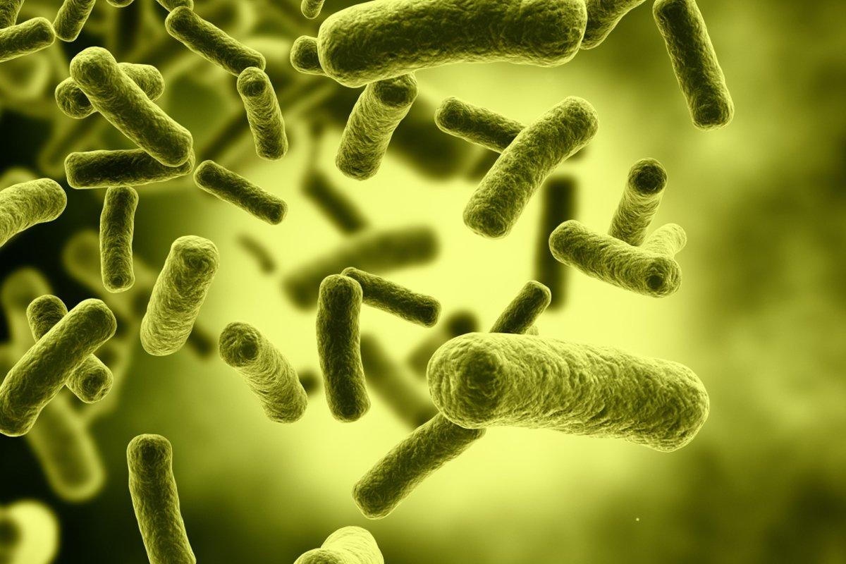 تقرير عن البكتيريا وأنواعها وأضرارها موسوعة