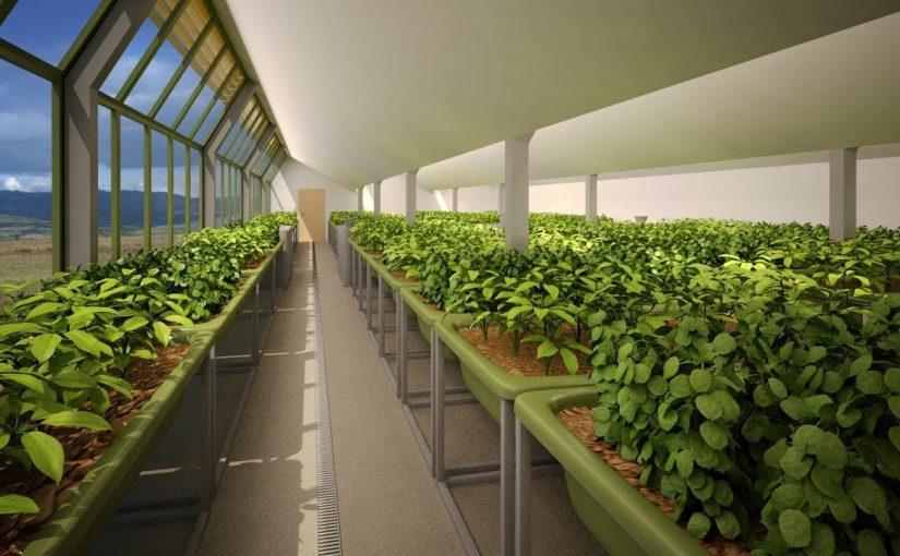 تقرير قصير عن الزراعة في دولة الامارات
