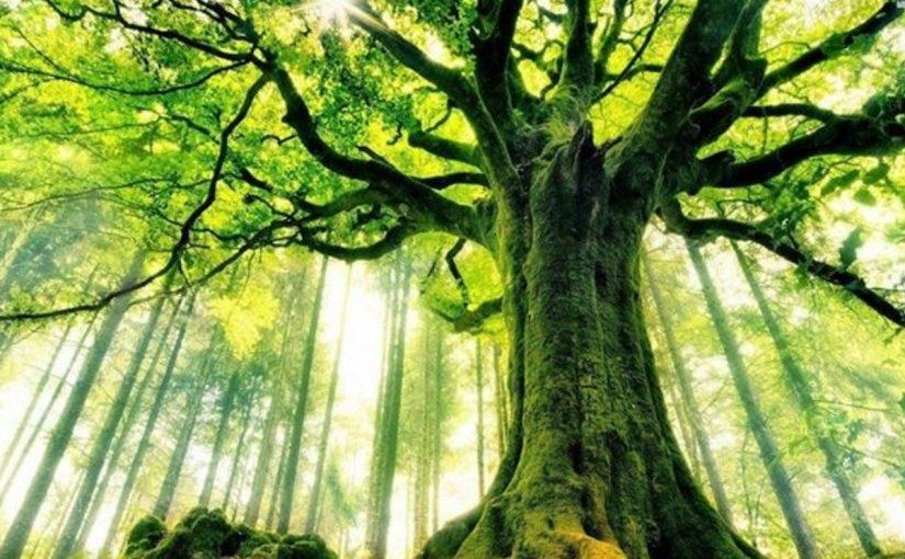 فوائد الاشجار