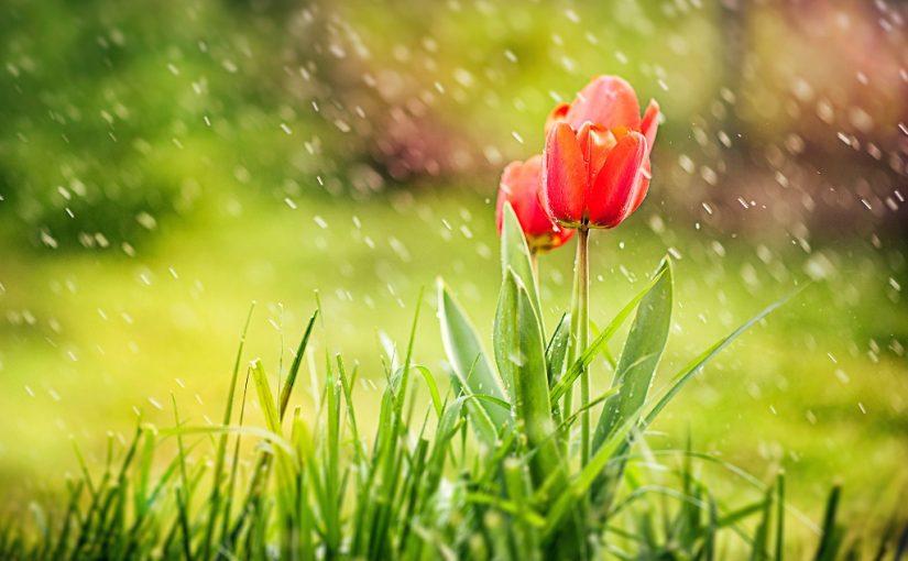 قصيدة صفي الدين الحلي في وصف الربيع