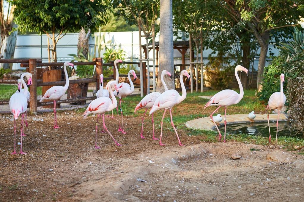حديقة حيوان ليماسول limassol zoo