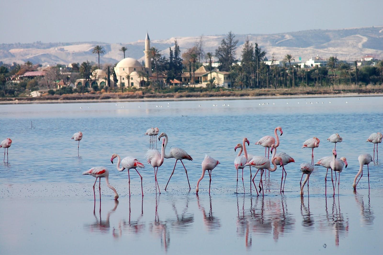 بحيرة لارنكا المالحة Larnaca Salt Lake