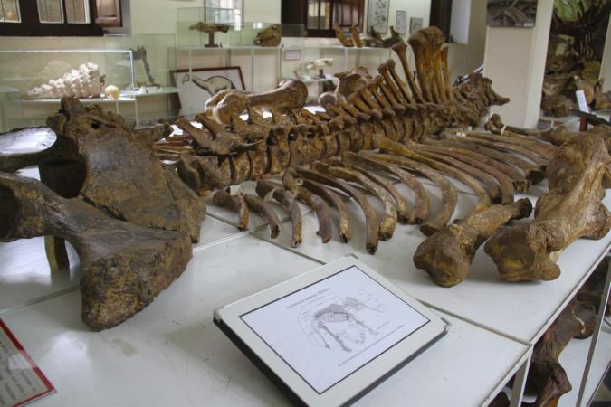 متحف الحفريات Paleontology Museum