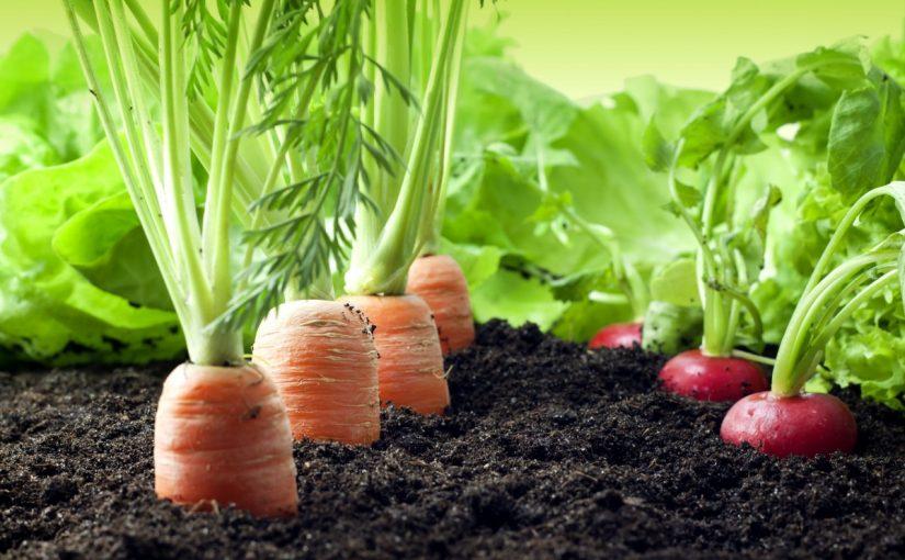 خطوات زراعة الخضروات حديقة المنزل