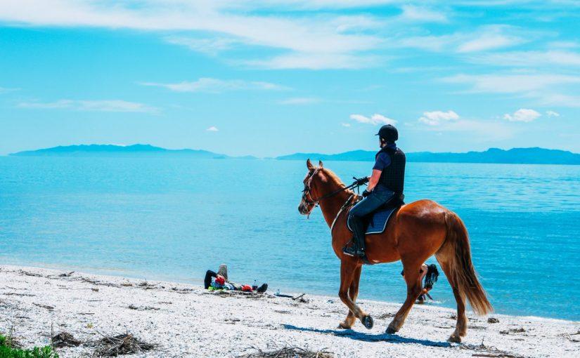 تفسير رؤيا الخيل أو الفرس أو الحصان في المنام وإلى ماذا يرمز المهر في حلم العزباء ويب سي