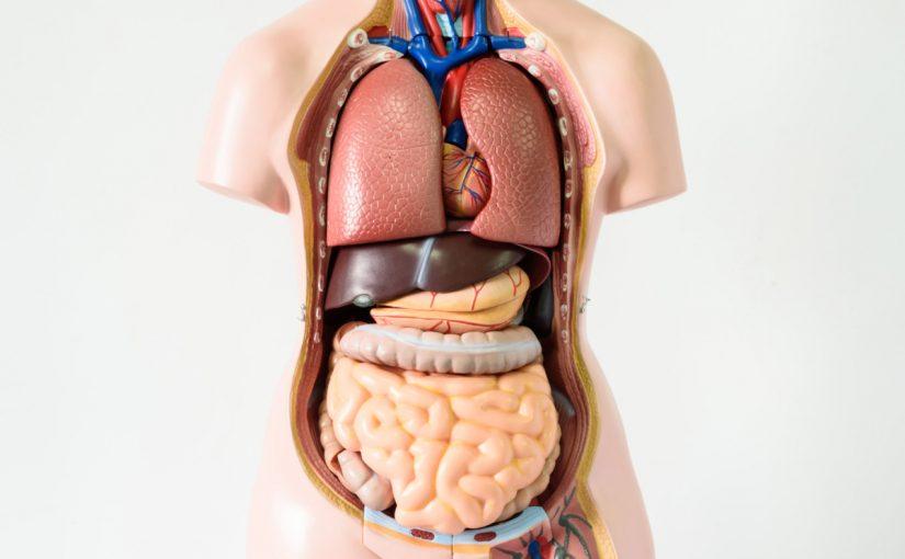 معلومة غريبة عن الجهاز الهضمي